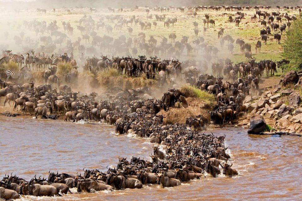 Popular African Safari Destinations