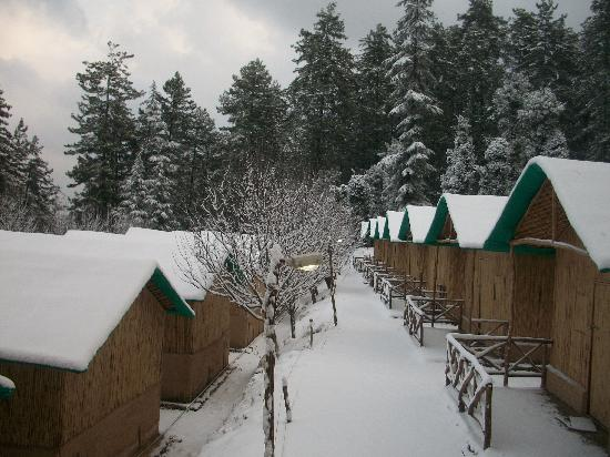 Best Trekking and Camping Options in Shimla